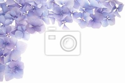 Blütenblatt Umrandung