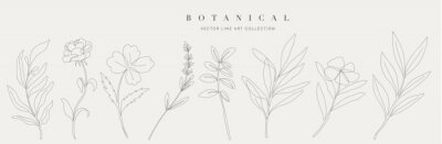Fototapete Botanical arts. Hand drawn continuous line drawing of abstract flower, floral, ginkgo, rose, tulip, bouquet of olives. Vector illustration.
