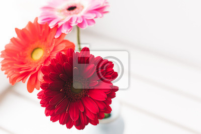 Fototapete bouquet of gerberas on a white background in a blue vase. fresh bright gerberas on a spring day