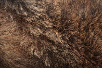 Fototapete Braunbär (Ursus arctos) Fellbeschaffenheit.