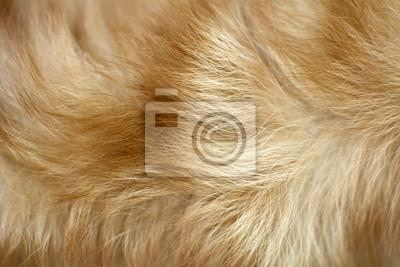 Fototapete brauner Hund Fell Hintergrund