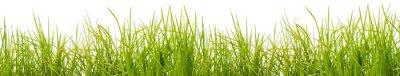 Fototapete Brins d'herbe, fond blanc