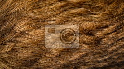 Fototapete Brown und beige Hundefell Textur