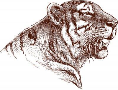 Fototapete brüllend Tiger