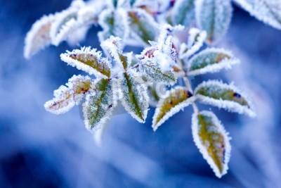 Fototapete Brunch in frost - sehr flachen Fokus