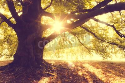 Fototapete Buche im Morgenlicht