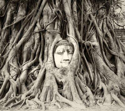 Fototapete Buddha Kopf in Baum Wurzeln in Wat Mahathat, Ayutthaya, Thailand