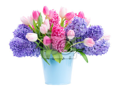 Fototapete Bunch of hyacinth blue and pink fresh flowers in blue pot isolated on white background