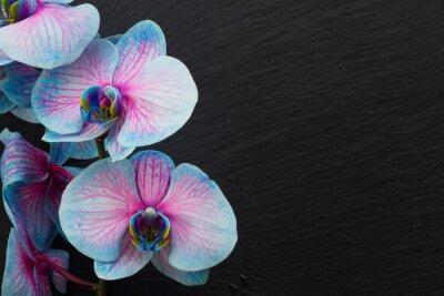 Fototapete Bündel violette Orchideen