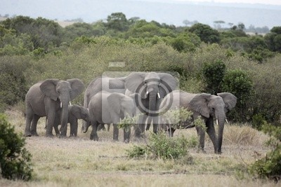 Bündel von Elefanten