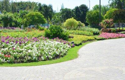 Fototapete Bunte Blumen im Garten