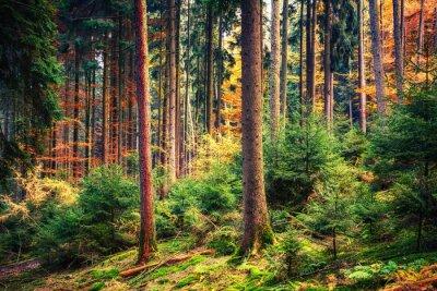 Fototapete Bunte Herbst Wald in Deutschland