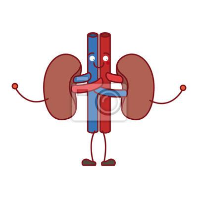 Bunte silhouette karikatur nieren-system der menschlichen körper ...