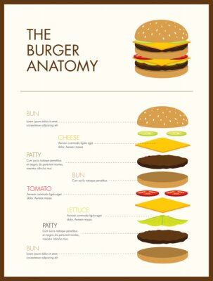 Burger-Anatomie