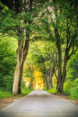 Fototapete Bürgersteig-Gasse Weg mit Bäumen in Parks.