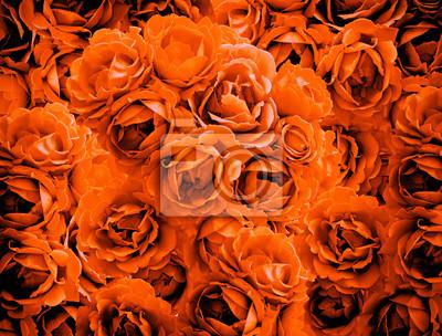 Bush von orange stieg blumen hintergrund hoch kontrastiert mit ...