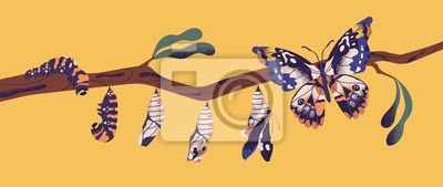 Fototapete Butterfly life cycle - caterpillar, larva, pupa, imago eclosion. Stages of metamorphosis, growth and transformation process of winged insect on tree branch. Flat cartoon colorful vector illustration.