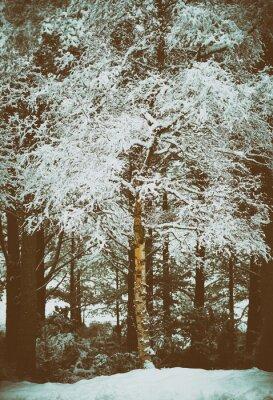 Fototapete Cairngorms, Schottisches Hochland