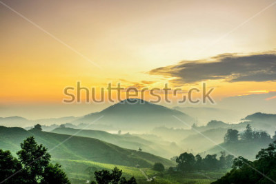 Fototapete Cameron Highlands ,Malaysia. Sunrise  at green tea farm mountain. Dramatic moving cloud in nature landscape on sunshine morning.