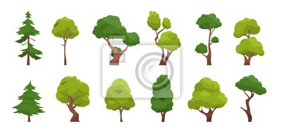 Fototapete Cartoon tree. Simple flat forest flora, coniferous and deciduous meadow trees, oak pine Christmas tree isolated plants. Vector set illustration agricultural garden and nature park plant