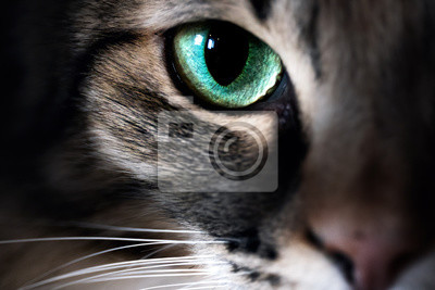 Fototapete Cat eye macro closeup animal