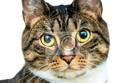 Fototapete Cat Portraint weißen Hintergrund
