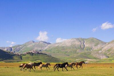 Fototapete Cavalli al galoppo nei pressi di Castelluccio