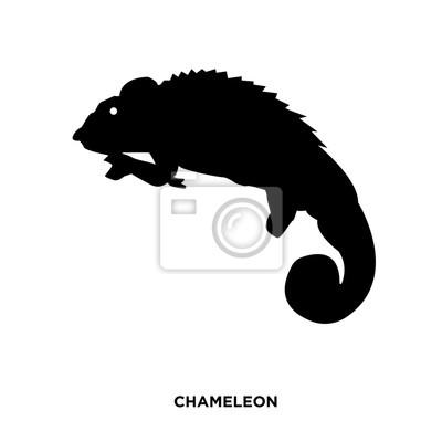 Chamäleon Silhouette Auf Weißem Hintergrund In Schwarz Fototapete