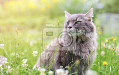 Fototapete Chewie die Katze in der Wildnis