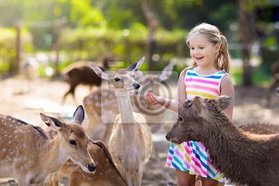 Fototapete Child feeding wild deer at zoo. Kids feed animals.