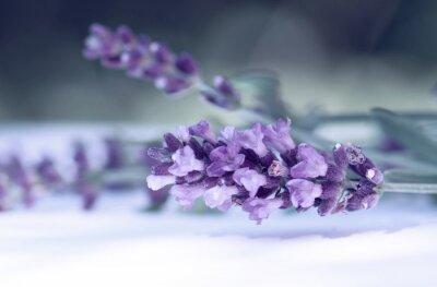 Fototapete Cloce von Lavendelblüten
