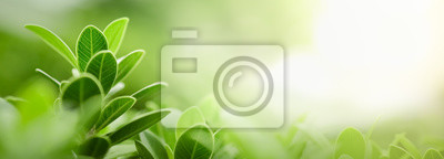 Fototapete Close up of nature view green leaf on blurred greenery background under sunlight with bokeh and copy space using as background natural plants landscape, ecology wallpaper or cover concept.