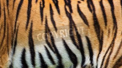 Fototapete close up Tiger Haut Textur