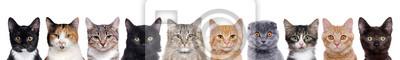 Fototapete Closeup Portrait einer Gruppe von Katzen von verschiedenen Rassen sitzen in einer Zeile isoliert über weißem Hintergrund