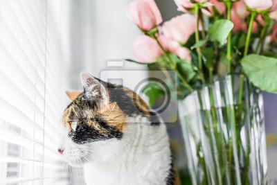 Fototapete Closeup Portrait Von Calico Katze Sitzt Auf Küche Zimmer Tisch  Suchen Außen Von Rosa Rose