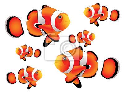 Clownfische mit weißem Hintergrund