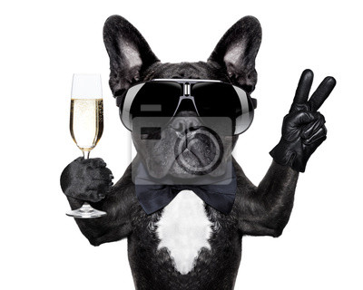 Fototapete Cocktail-Hund