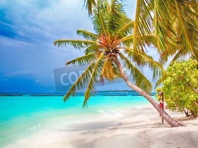 Fototapete Coconut palm beach