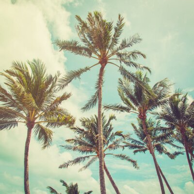 Fototapete coconut palm tree and blue sky clouds with vintage tone.