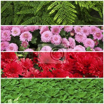 Collage Mit Schönen Blumen Und Pflanzen Im Garten Fototapete