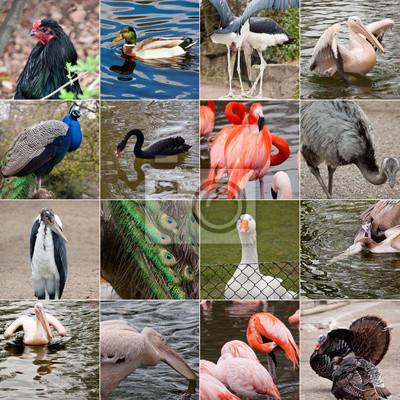 Collage von Vögeln