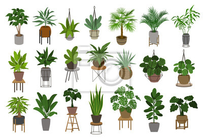 Fototapete collection of different decor house indoor garden plants in pots and stands graphic set