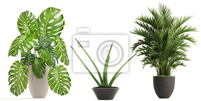Fototapete collection of ornamental plants in pots