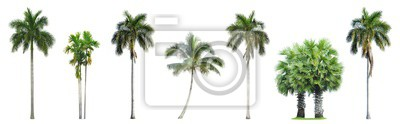 Fototapete Collection of Palm trees isolated on white background