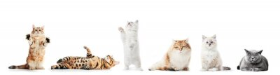 Fototapete Collection of purebred cats isolated on white