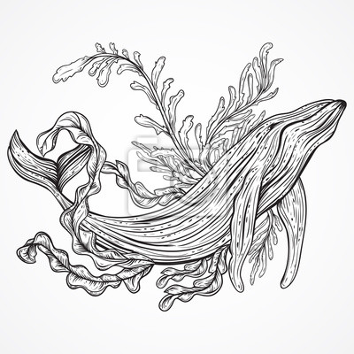 Fototapete Collection of whale, marine plants, leaves and seaweed. Vintage set of black and white hand drawn marine life. Isolated vector illustration in line art style.Design for summer beach, decorations.