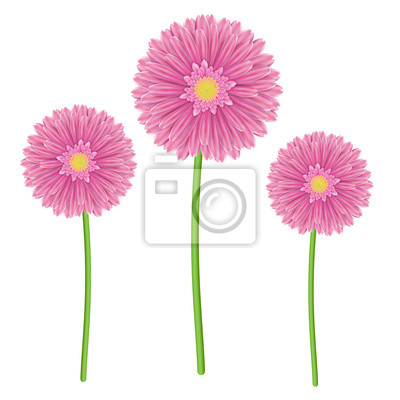 Colorful gerbera flower head - pink and green colors.