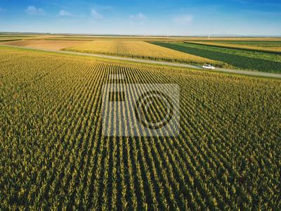 Fototapete Corn field from drone perspective