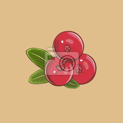 Cranberry im Weinleseart. Farbigen Vektor-Illustration