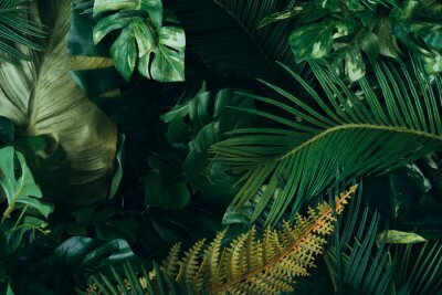 Fototapete Creative layout made of tropical leaves. Flat lay. Nature concept.